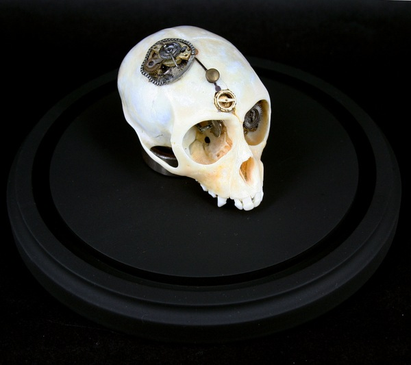543381269294729 thumb Extreme Steampunk Beyond the Grave Terminal Techno Taxidermy