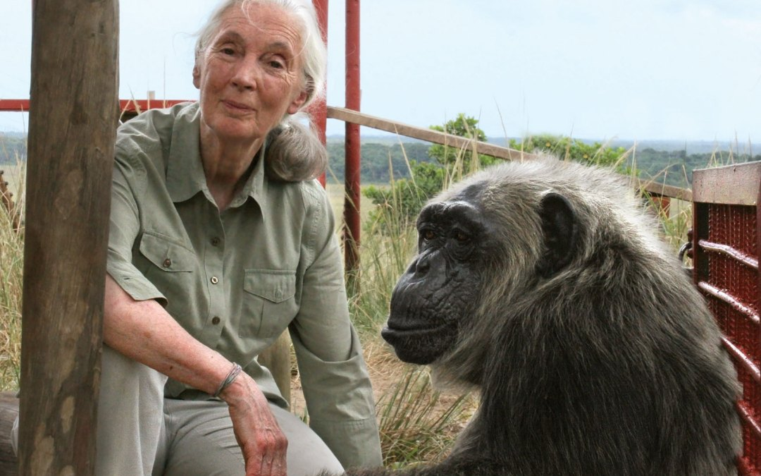 Jane Goodall Wins the Templeton Prize