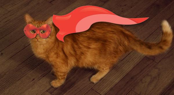 The Menagerie Part 3:  The Feline