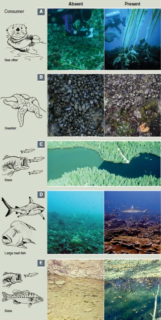 Figure 1 from a Science review paper on top-down ecosystem controls by Estes et al. Figure 1 shows aquatic ecosystems with and without the top consumer.