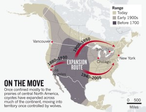 Coyotes are expanding their range east. Photo credit: Pixgood.com (https://pixgood.com/coyote-range-expansion.html).