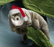 tardigradetest