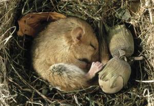 Image chipmunks:https://www.euclidlibrary.org/kids/tickle-your-brain/hibernation-a-long-winter-s-nap