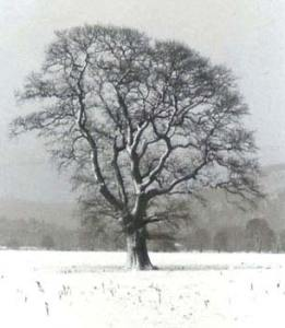 Deciduous tree in winter. Photo credit; Image of deciduous:https://www.biology-fieldwork.org/woodland/woodland-plants/