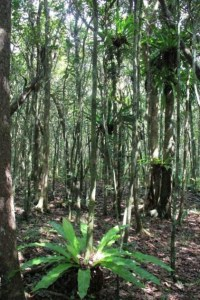 A peaceful sunny day in a restored forest of Mauritius