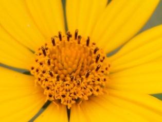 monochromatic yellow