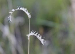 grass curve
