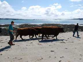 The beach was the most direct route to the next field!