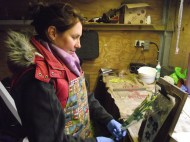 Nicola bunches and sleeves in the shed