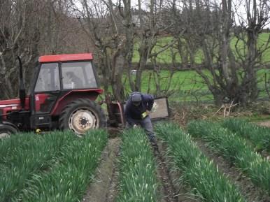 Alex picks in his fields...