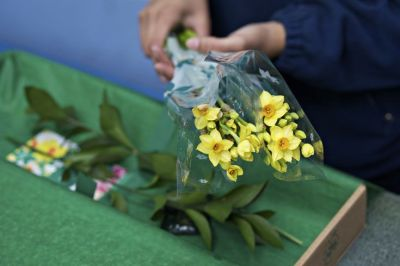 Packing narcissi