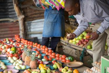 Man bending down to select from a variety of fruits on a table. A consequence of the GMO debate has been the thwarting of efforts to develop local genetically modified crops in developing nations.