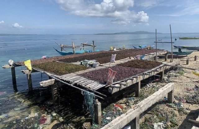 Zambo, seaweed farmers, drying, science & technology, DOST IX