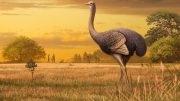 Bird Three Times Larger Than Ostrich Discovered