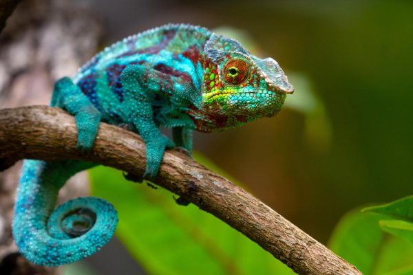 Researchers Develop a Flexible Color-Changing Film Inspired by Chameleon  Skin