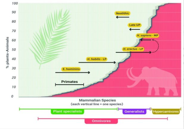 Evolution of HTL during the Pleistocene
