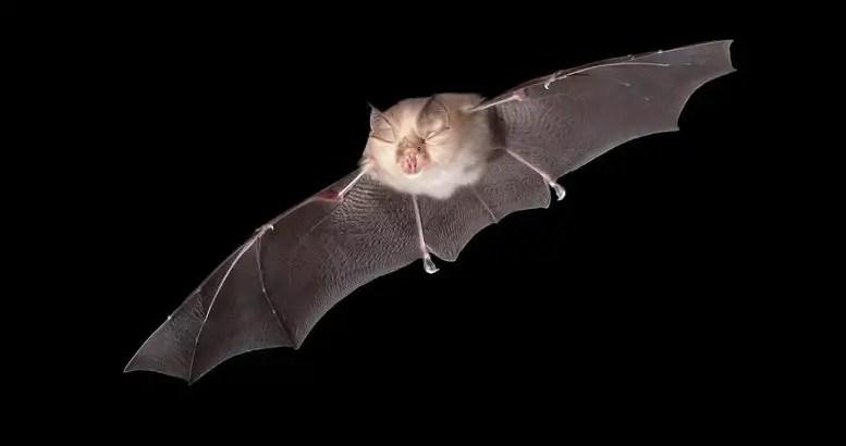 Horseshoe Bat University of East Anglia