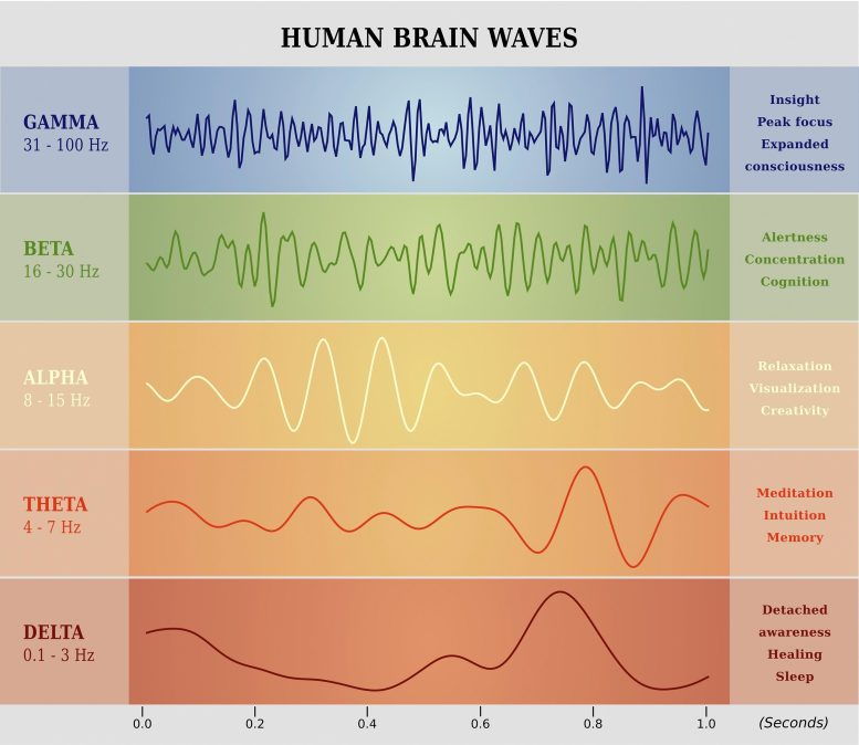 Human Brain Waves Chart