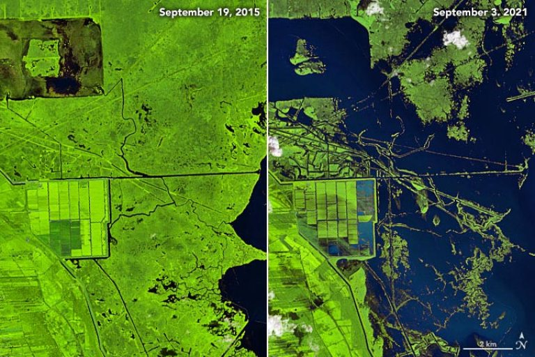 Marshes Before and After Hurricane Ida
