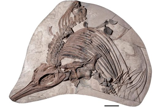 A New Species Dubbed the Prehistoric 'Sea Dragon' Discovered in English Channel 2