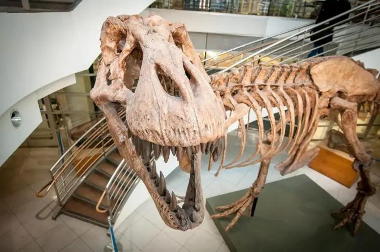 T. rex Cast at UC Berkeley