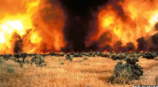 cheatgrass-wildfires