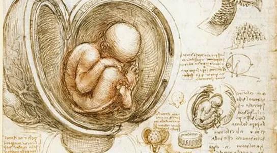 da-vinci-fetus