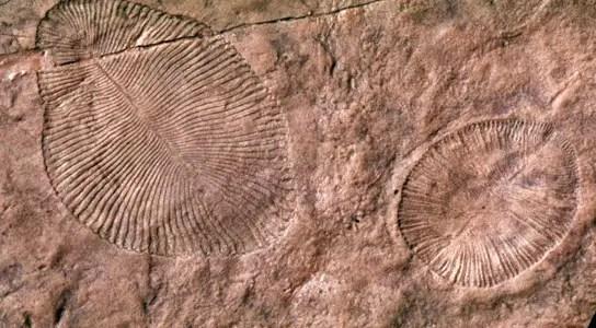dickinsonia-parvancorina-terrestrial