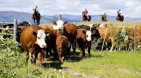 echo-valley-ranch