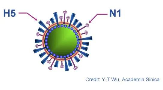 h5n1-virus-wu