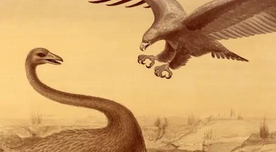 haasts-eagle-moa