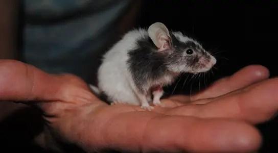 mice-memory-erasure