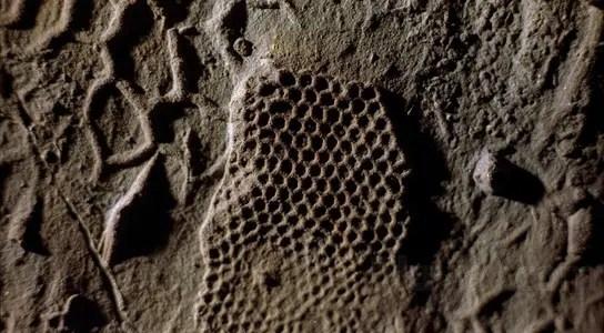 paleodictyon-fossil