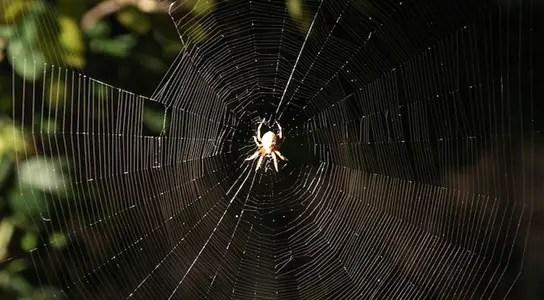 spider-silk-strength-web
