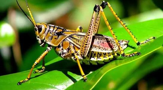 stressed-grasshopper