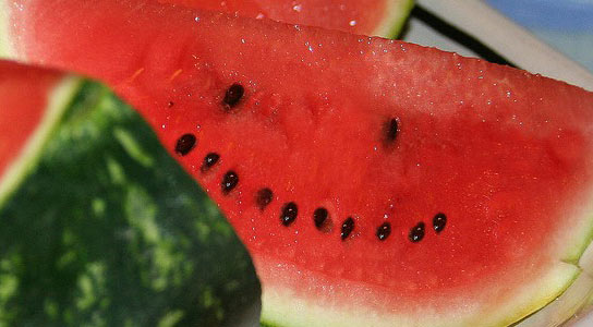 watermelon-happiness