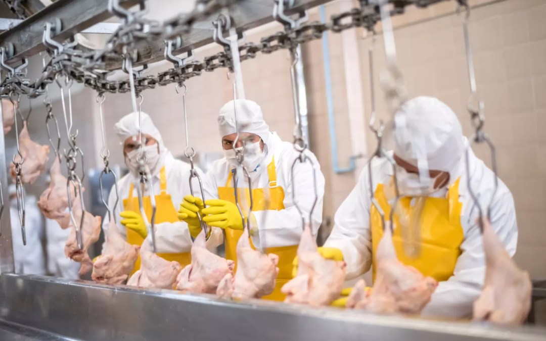 The Fight for Safer Food
