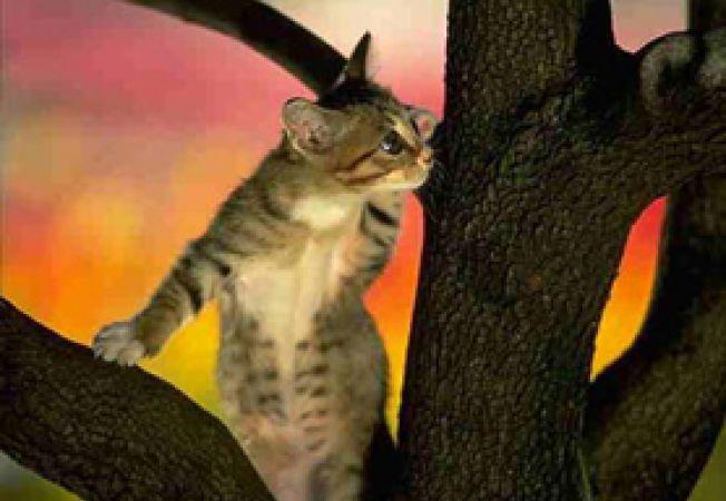Imagini pentru poze cu pisici în copac