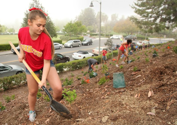 Volunteer Chrissy Cheung plants shrubs on a steep slope near the Mission Viejo Earth Day and Arbor Day celebration event in 2013. (Chas Metivier, File Photo)