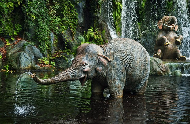 """One of the """"little squirts"""" in the sacred elephant bathing pool of the Jungle Cruise in Adventureland at the Magic Kingdom of Walt Disney World. (Courtesy: The Walt Disney World Resort)"""