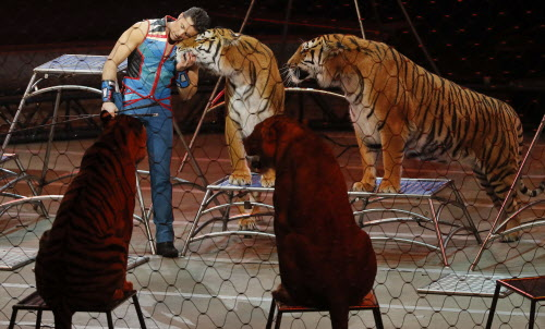 "Big cat trainer Alexander Lacey hugs one of the tigers during the final show of the Ringling Bros. and Barnum & Bailey Circus, Sunday, May 21, 2017, in Uniondale, N.Y. Ringling's circus began its final show Sunday evening after 146 years of wowing audiences with its ""Greatest Show on Earth."" (AP Photo/Julie Jacobson) ORG XMIT: NYJJ109"