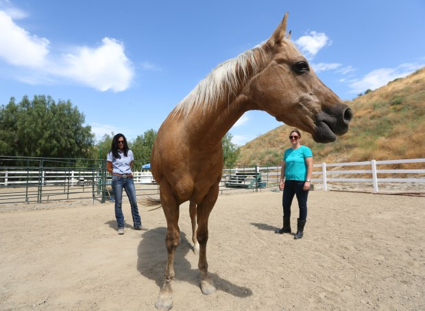 Paula Harold, right, visits Heidi, a horse she used in a horse therapy program through Equus Medendi Equine Assisted Therapy in Redlands on Wednesday, May 24, 2017. To the left is Angie Sheer, founder/executive director of the program. Paula is a survivor from the Dec. 2nd terrorist attack in San Bernardino and is now dealing with PTSD. She has completed 12 sessions of the horse therapy program to help her with the issues. (Stan Lim, The Press-Enterprise/SCNG)