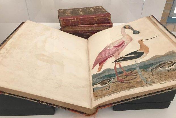 "The 200-year-old book ""American Ornithology"" by Alexander Wilson, on display in Cal State Fullerton's Pollak Library, is open to a plate showing a spoonbill and American avocet. (Photo by Wendy Fawthrop, The Orange County Register/SCNG)"