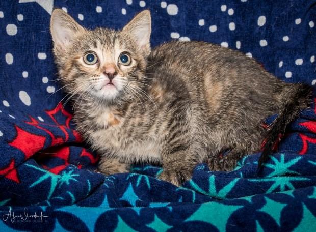 Polly kitten