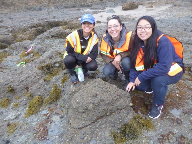 Students Amber Sanderson, Brittany Cook and Shannon Chou pose in the rocky intertidal zone while conducting experiments over the summer. (Photo courtesy of Cal State Fullerton)