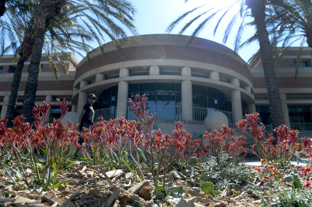 Red Kangaroo Paw, a low-water use plant, line the ground outside of city hall in Rancho Cucamonga, Monday, May 1, 2017. The city has retrofitted grass areas across the city with drought tolerant plants for water conservation. (Photo by John Valenzuela/Inland Valley Daily Bulletin/SCNG)