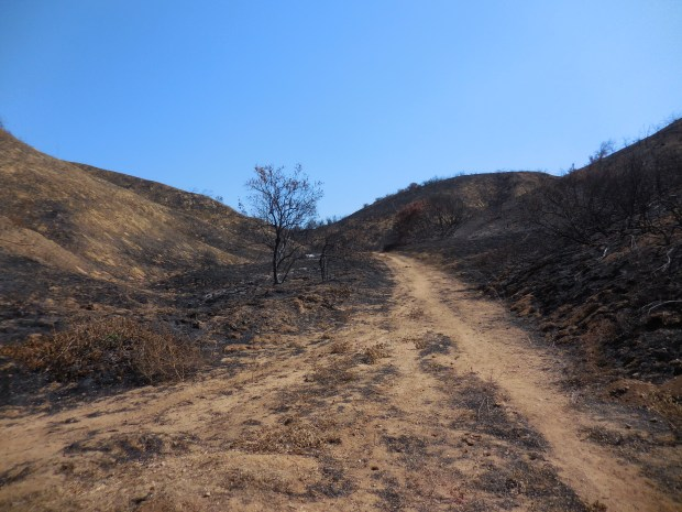 Redlands Conservancy's Oct. 28, 2017, Trails at 10 hike will be in areas burned in the recent Palmer Fire. (Courtesy Photo)