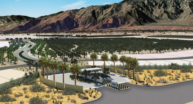 An overview of Miralon in Palm Springs, where an 18-hole golf course is being replaced with dozens of olive groves.(Rendering courtesy of Freehold Communities)