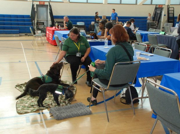 Comfort dogs from Hope Animal-Assisted Crisis Response were on hand at Anaheim's assistance center Friday, Oct. 13, to soothe victims of the Canyon Fire 2.