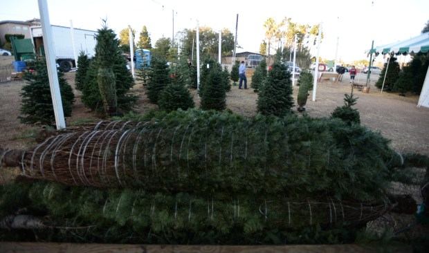 George's Christmas Trees at the corner of 9th Street and Western Avenue in San Pedro. Christmas tree prices are higher this year because of a tree shortage that has its roots in the 2008 recession. Fewer people bought trees that year, so farmers planted fewer and since they take a decade to mature. Monday, November 27, 2017. ( Photo by Stephen Carr, Daily Breeze / SCNG )